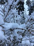 Winter. Snow on the trees in the winter royalty free stock photo