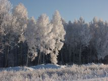 Winter snow and trees Stock Image