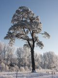 Winter snow and trees Stock Photography