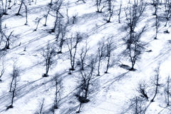 Winter snow trees Royalty Free Stock Photography