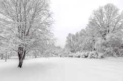 Winter with snow on trees. Apple trees after winter snow storm Stock Photography