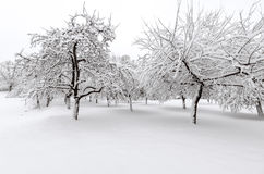 Winter with snow on trees. Apple trees after winter snow storm Stock Photos