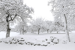 Winter with snow on trees. Apple trees after winter snow storm Royalty Free Stock Photography