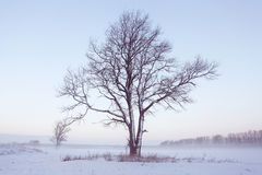 Winter snow trees. Background beautiful Royalty Free Stock Photos