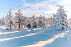 Winter Snow Trees Forest Sun Mountain View Stock Image