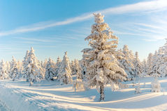 Winter snow trees forrest sun mountain Stock Images