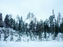Winter snow trees on hills. Background Stock Images