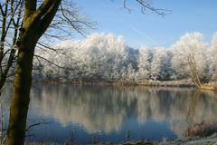Winter snow trees with lake Royalty Free Stock Images