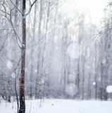 Winter snow trees Stock Photo