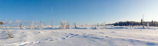 Winter snow trees panorama stock photos