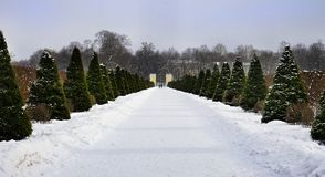 park garden winter trees snow sky outdoor stock photo