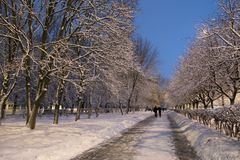 Winter snow trees . Park with alley tree rows in evening . Town winter landscape Royalty Free Stock Image