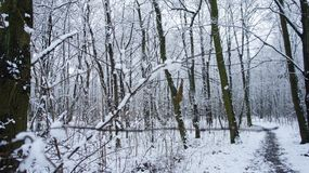 Winter Snow Trees, Park Road Perspective, White Alley Tree Rows royalty free stock images