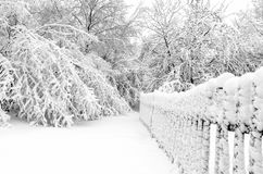 Winter with snow on trees. Trees after winter snow storm Stock Image