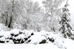 Winter with snow on trees. Trees after winter snow storm Royalty Free Stock Photography