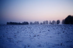 Winter snow trees Royalty Free Stock Images