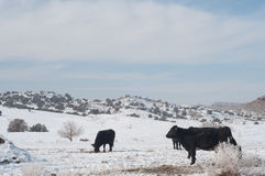 Winter Snow in Western Colorado Stock Photo