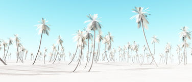 Winter snow white palm beach landscape. Stock Image