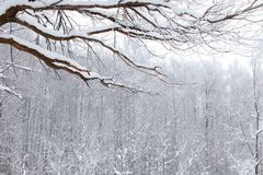 Winter snow wood landscape Stock Images
