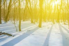 Winter snowbound forest scene Stock Photography