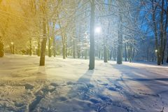 Winter snowbound park scene. At the night Royalty Free Stock Photography