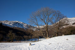 Winter in Snowdonia Royalty Free Stock Photography