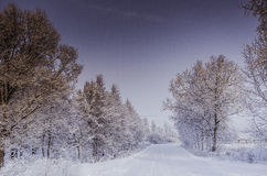 Winter snowdrifts, Russian Winter Stock Images
