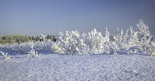 Winter snowdrifts, Russian Winter Royalty Free Stock Photos