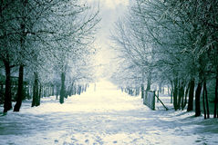 Winter snowed landscape. A typical winter landscape with a wood totally covered by the snow Stock Images