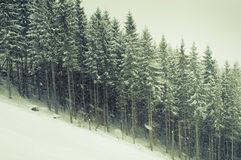 Winter snowfall Royalty Free Stock Images