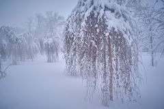 Winter snowfall. Moscow weather snowfall storm snow Stock Images