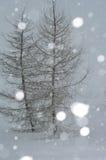 Winter. Snowfall. Photo. Royalty Free Stock Photo