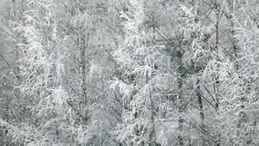 Winter snowfall stock footage