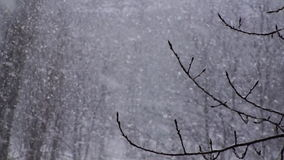 Winter Snowflakes Snow Background stock video footage