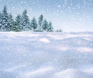 Winter snowing background. Winter forest in snow, background Royalty Free Stock Photo