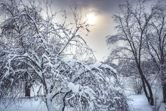 Winter snowing forest landscape with snowy covered trees and dramatic sky and sun stock images