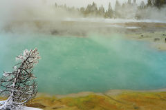 Winter Snowing Geothermal Pool Yellowstone Royalty Free Stock Photos