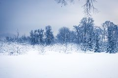 Winter snowing landscape forest with snowy covered trees and dark blue dramatic sky royalty free stock photography
