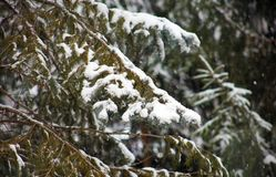Winter snowing scene with trees in background Royalty Free Stock Photo