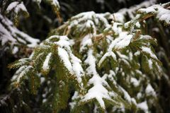 Winter snowing scene with trees in background Stock Photography