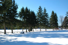 Winter snowscape. Winter snow and pines along a lake royalty free stock photography
