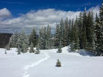 Winter Snowshoe Trail at Montgomery Pass in Colorado. Snowshoe trail going into snow covered trees near Montgomery Pass in Colorado Royalty Free Stock Photography