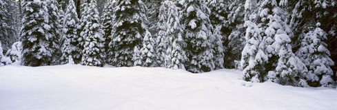 Winter Snowstorm Stock Photo