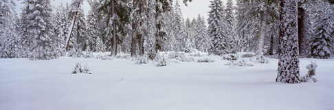 Winter Snowstorm Stock Photos
