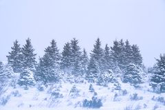 Winter Snowstorm Stock Photography
