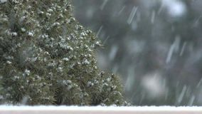 Winter snowstorm with evergreen tree in background stock video footage