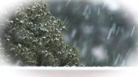 Winter snowstorm with evergreen tree in background stock footage