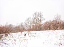 Winter, Snowstorm. Forest strip. Nature.