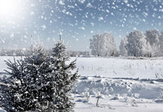 Winter snowstorm Royalty Free Stock Photos
