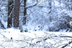 Winter Snowy Background with Small Bird stock photography